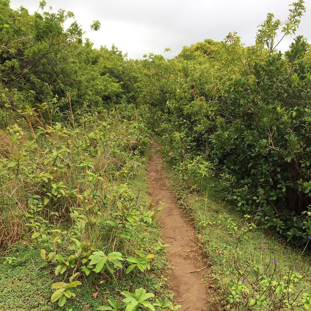 Jackpot. Guava field. Lunch!! @christina.cogswell