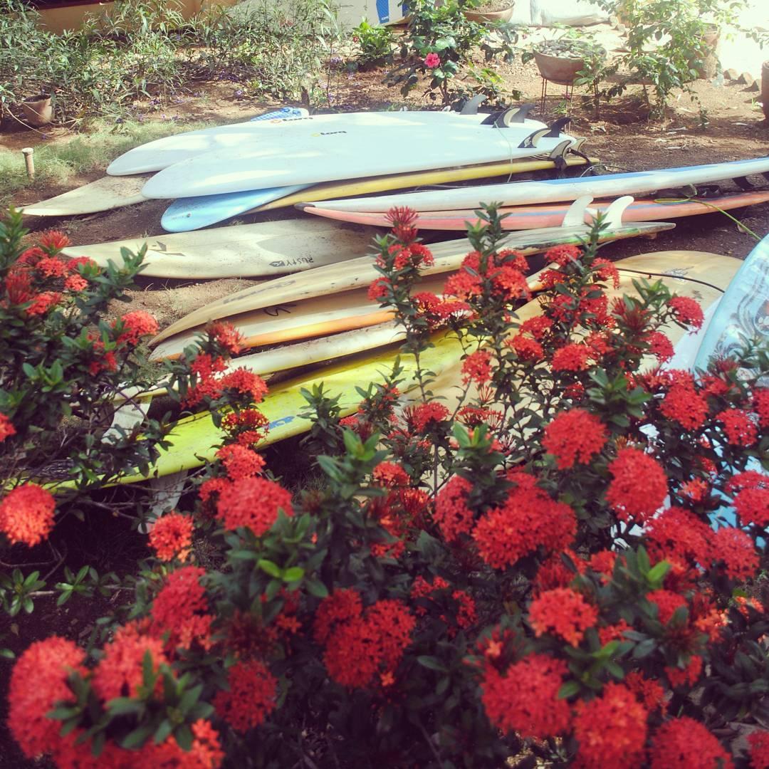 SURF N' ROSES Recuerdos de nuestra estadía en @nicawaves , Nicaragua. #maetuanis #surf #surfing #surftrip #popoyo #nicaragua #puravida