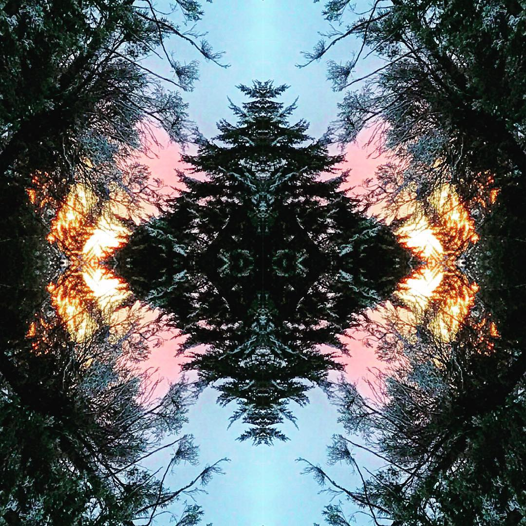 """Between every two pines is a doorway to a new world."" John Muir. #avalon7 #inspiredstate www.a-7.co"