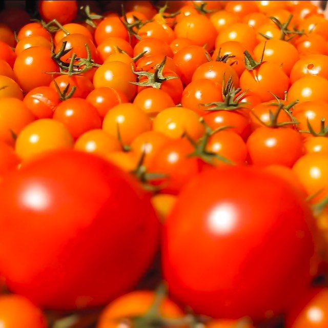Un#Rotten Tomato movie review edition :  Check out the latest #harvest from our #DeepBlueLife video series: Growing Community – A Full Season at Two Pine Farm .