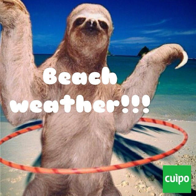 Happy sloth sunday!!!! Time to hit the beach. #slothsunday #sloth #cuipo #saverainforest