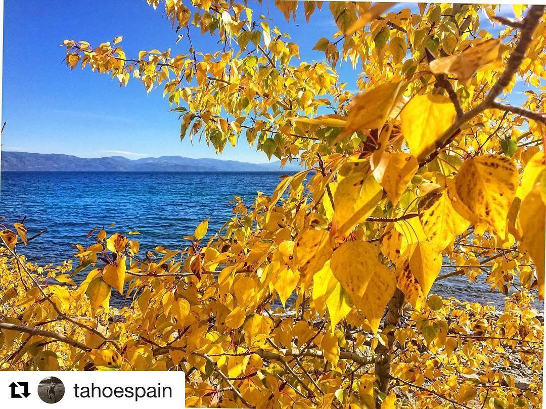Fall leaves contrasting beautifully against the brilliant blue of Lake Tahoe