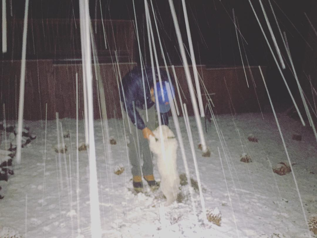 Snowy Tahoe night and puppies.  @theninopup and @skiingrogge are stoked #winteriscoming . #embracethestorm #defineyourroute