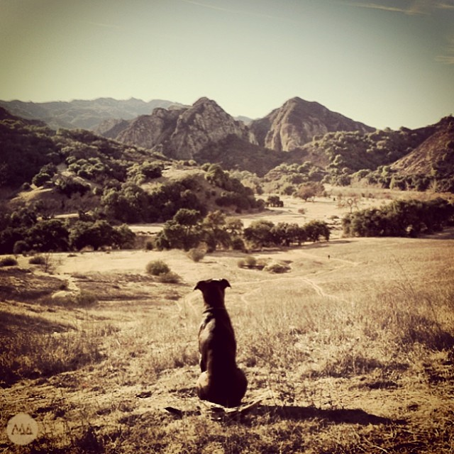 Lennon Dog headed to a Malibu climb. #lennongram #mansbestfriend #climbmore #greettheoutdoors