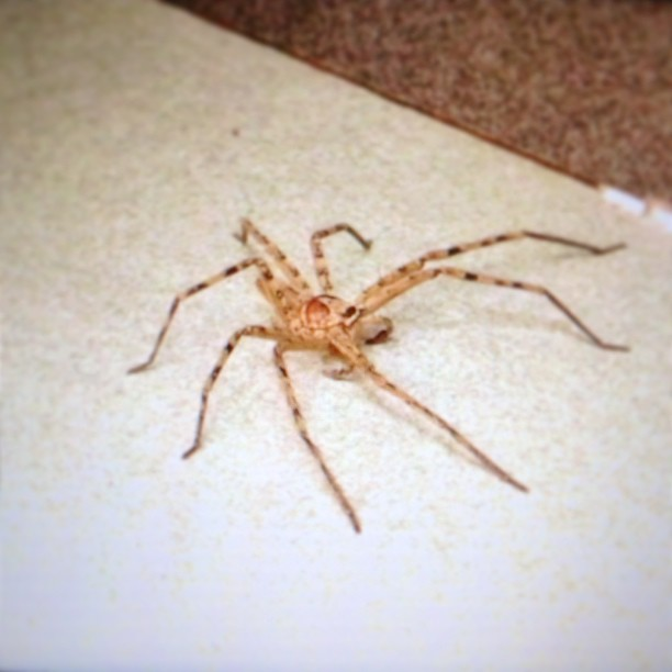 The bad thing about outdoor bathrooms in Indonesia - giant ass spiders. This thing was about 3/4 of an iPhone. #shudder