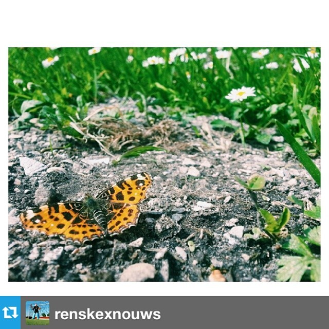 #Repost from @renskexnouws ---