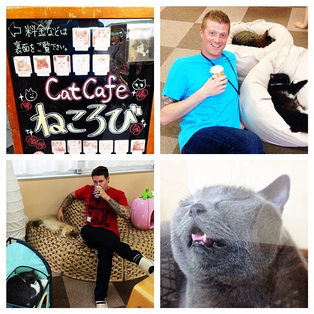 "It's a special edition of Fat Cat Tuesday as we bring you this gem from the Cat Cafe in Tokyo! If you're asking yourself, ""did those guys really pay money to hang out with a bunch of cats and drink coffee?"" Then your answer is, ""you bet your ass we..."