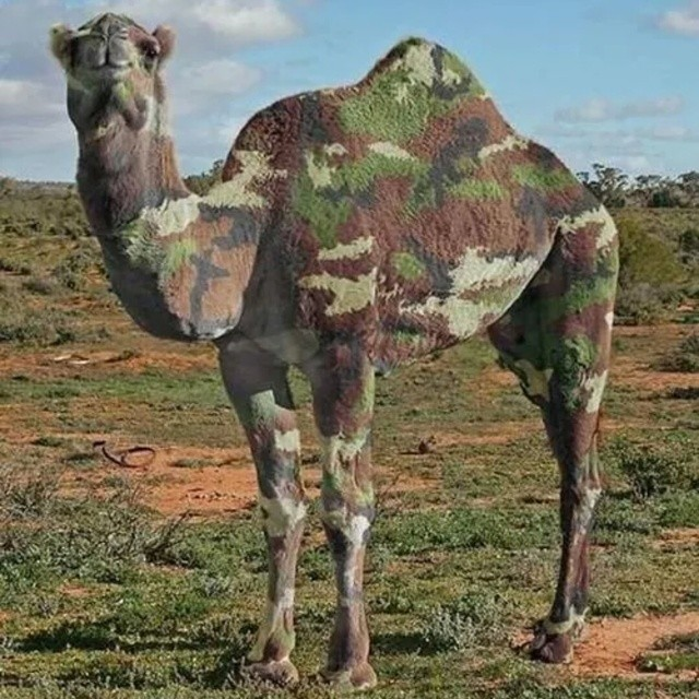 What do you guys think about a #camo design on the next #REX? #happyhumpday