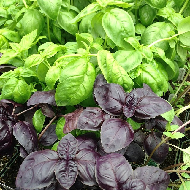 Have you planted your #garden yet? It doesn't get much more #local or #fresh than homegrown food....