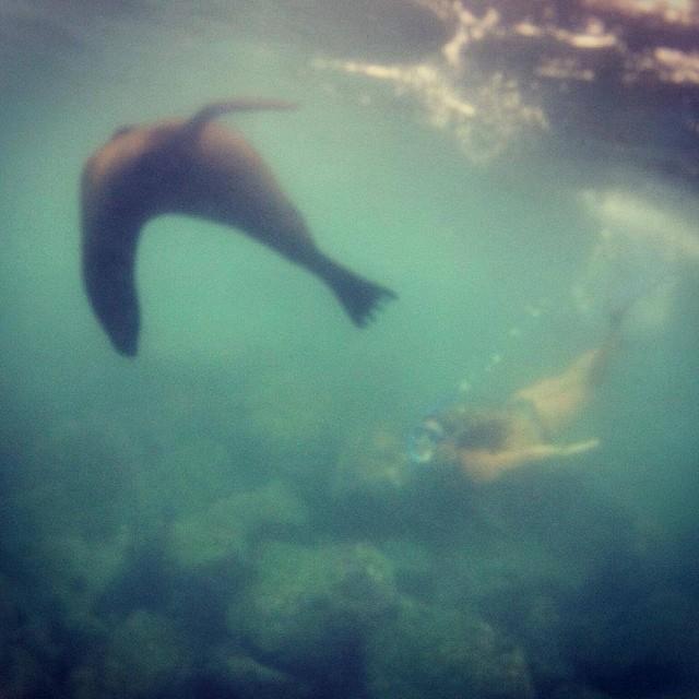 Viernes marino ✌ @agustinacerruti en pleno contacto con la naturaleza. #soul #waves #sealion #weekend #reefargentina