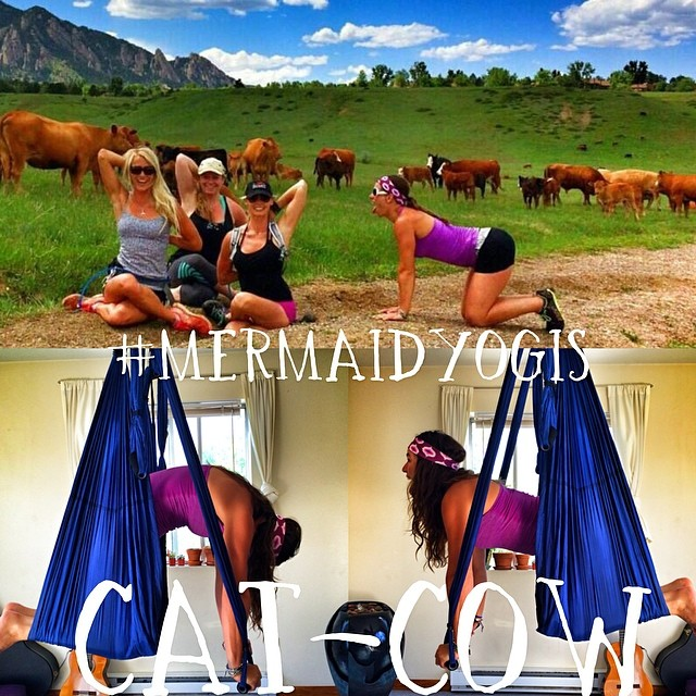 #mermaidyogis hitting up the farm for some true yoga inspiration from the cows themselves! @stoked_yogi @zengirlmandy @olympussup @thesupyogi @localhoneydesigns @indo_board