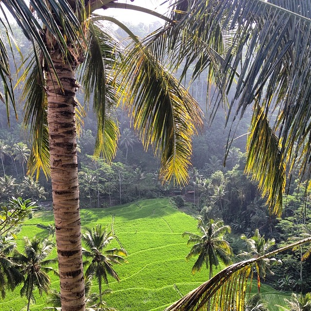 Welcome to #Ubud #Bali #lush #ricepaddies #jungle #wanderlust #travel #exploremore