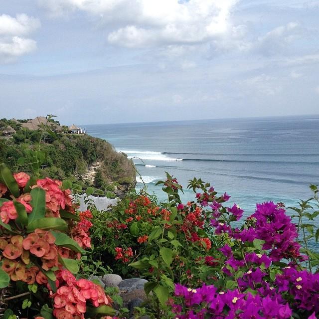 Flowers + waves + cliffs =