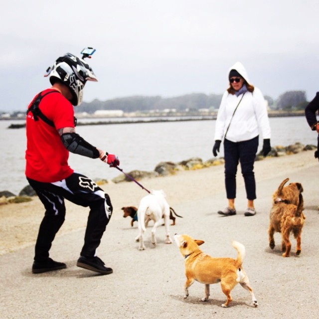 Walking dogs in style: dirt bike gear and tons of Velocity Clips. Thanks to the sweet couple for letting us borrow their dog for a couple of minutes! #dogs #dogpark #dogsofig #pointrichmond •••••••••••••••••••••••••••••••••••••••••••••• ⊙ Click on the...