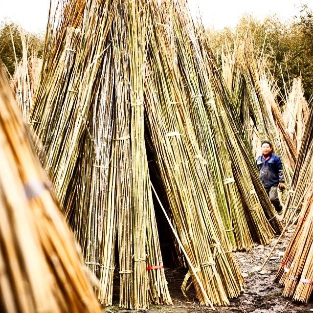 There's our farmer. We buy directly from him.  He grows our poles from over 100 year old root stocks in a temperate climate in China.  The bamboo is a native grass and grows without the use of pesticides, irrigation, or fertilizers.  Every pair of...