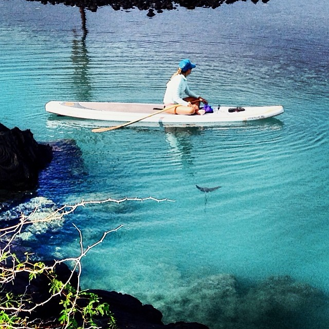 A new friend wants to #paddle with you @swellliving #exploration #lagoon #sup on #imaginepaddlesurf #paddlehi #itakebioastin @kaenon #polarizedeyeware