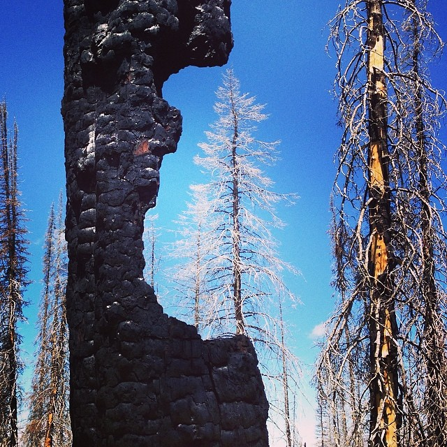 Burn, renew, regrow. Nature taking its course in the sawtooth mountains. #plantyoursoul