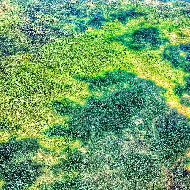 The human eyes sees more shades of green than any other color. View from above on way to sailfishing expedition. #natureisart #ariverrunsthroughit #okeefenokee