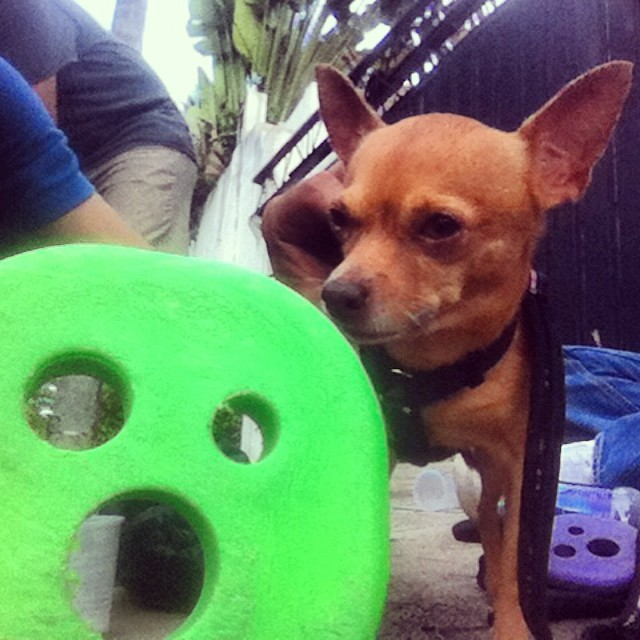 mmmm Tao loves the smell @delpatiolongboarding @miguelcabreja #staysteez #keepitholesom
