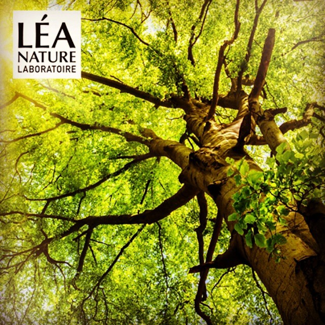Léa Nature engages in #reforestation with 215,000 trees planted to date! #giveback