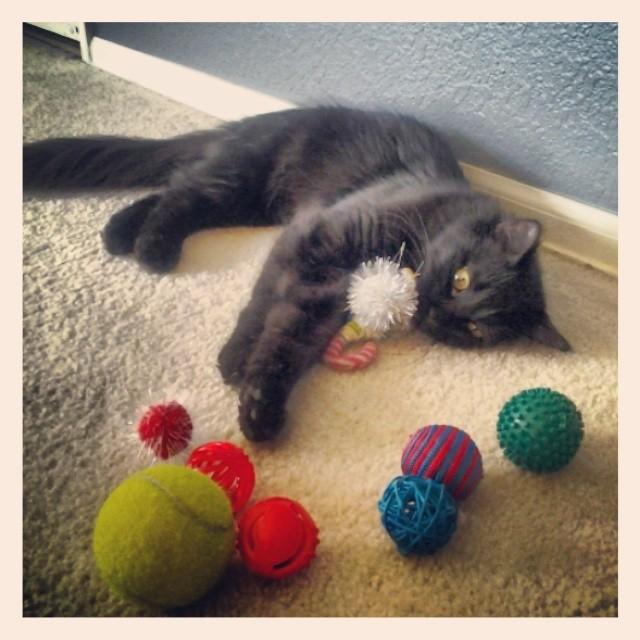 Latoya and her balls. #maincoon #balls @monprimm