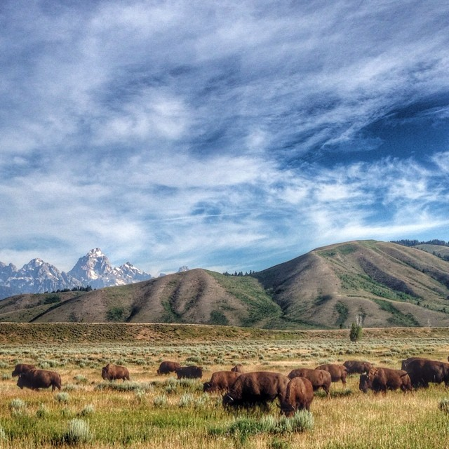 This place we call home does NOT suck...who agrees??#WILDANDFREE #tatanka #jacksonhole #tetons #grosventre @natgeo