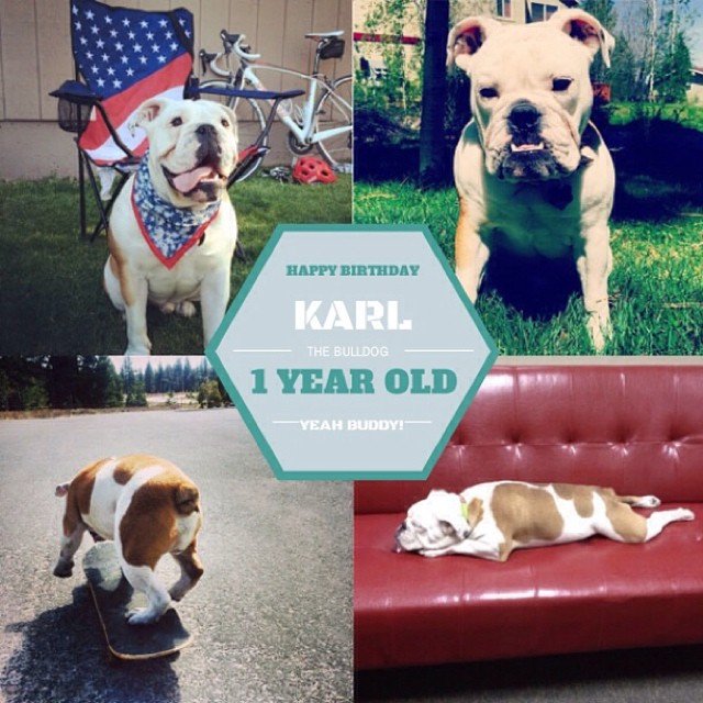 Happy 1st Birthday (yesterday) to #High5ives Mascot, @karlthebulldog || Keep having a blast buddy!