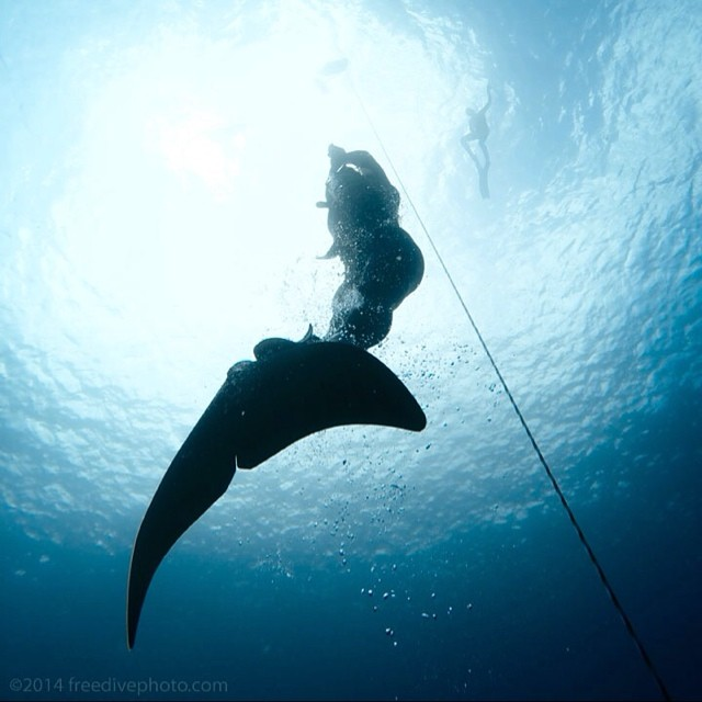 Last week I took a freediving course with Kurt Chambers (@chambersbelow) while back in Kona. I've been following his rad photography work for years and it was an honour to learn from him.  Did a 4m15s static breath hold on the 1st day and swam down to...