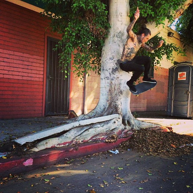 @cjlinde666 Tree Wallie
