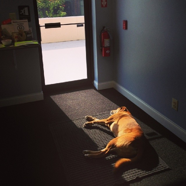 It's finally spring at the B Lab Philly offices...some of us are loving the sunshine more than others. Any #BCorps out there with office #pets?