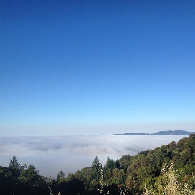 Sea of clouds #thegreatoutdoors #nature #morning #hike #bayarea #summer #sonoma