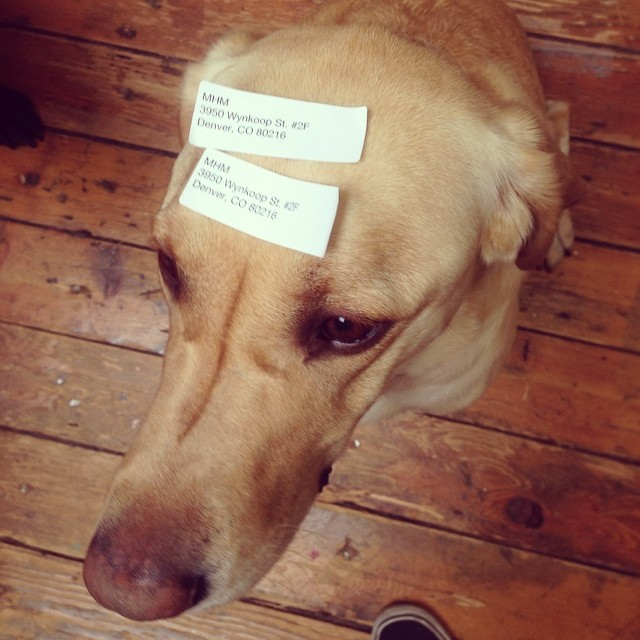 We tried to get rid of the yellow office hound but they mailed him back and doubled up on address labels just to make sure he wasn't returned...#painintheass