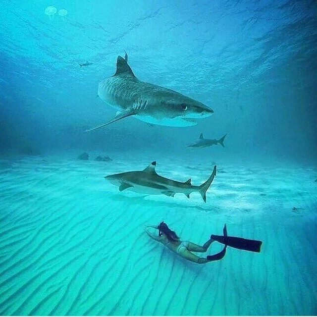 #LifesABeach | pic by Digital Editz #kameleonz #gopro #cannon #scubadiving #swimmingwithsharks
