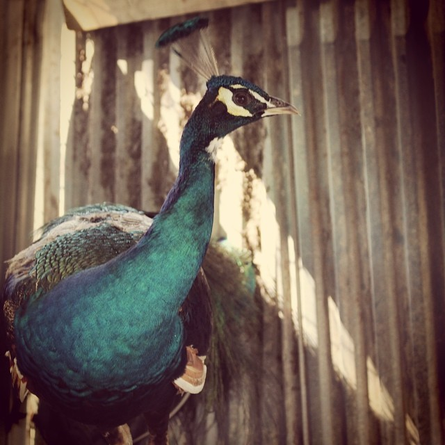 Yup, I'm being watched. #peacock