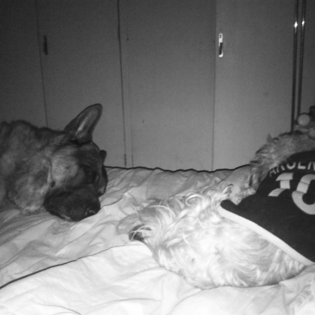 Si mamá nos descubre, nos mata #Mascotas #Perros #KimonYAlfi #Dogs #Babies #Cute