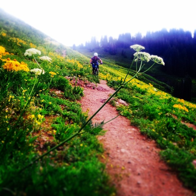 #SundayFunday #mtnbikes #ladyshred #brownpow #wildflowers @smithoptics @shredly @backcountrydotcom