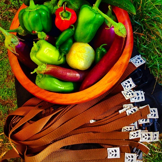 Not only does Shayne Metos sew our magic recycled straps, he also grows the most magical veggies, some of which he delivered with our last batch of straps... Bonus!!! Thanks for the love Shayne! #TRIBEUP magical veggies!  @wolfgangmeatsmith...