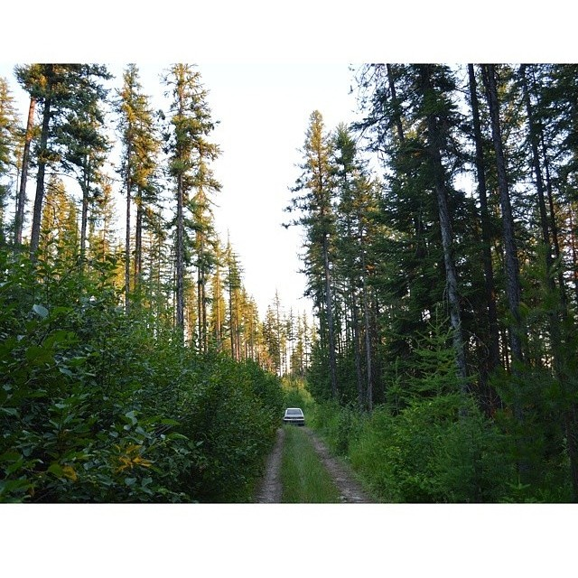 Get out there and explore the last bits of summer before it fades! Rad photo from our good friend @jakeskyler! // #firewaterfriends #explore #woods #adventure
