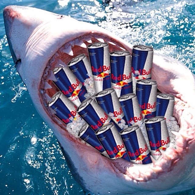 How do you keep up with #SharkWeek?  #GivesYouWings