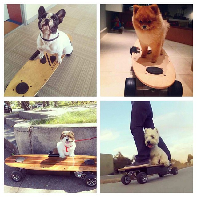 The sun is shining, perfect weather to take a #zboard ride with your four legged friend.