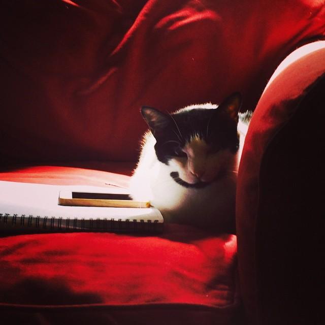 Working hard or hardly working? Meet 1%er Mink, the office cat. #catsofinstagram #caseofthemondays