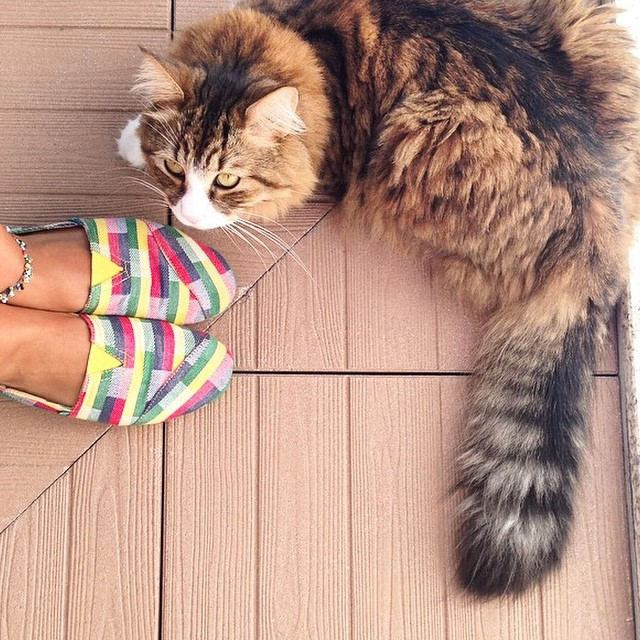 Nice picture from @ruidinis! #paezshoes #paezpetfriendly