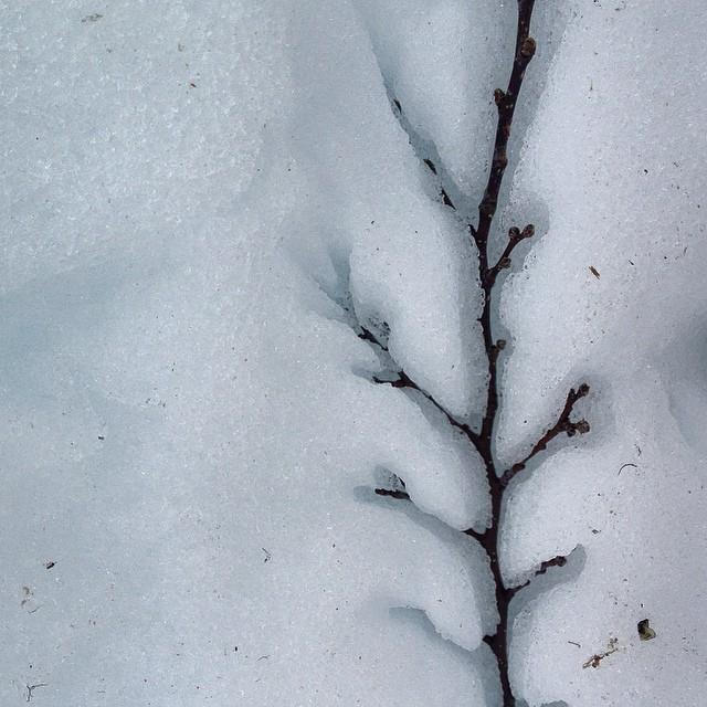 Árboles de sangre caliente existen