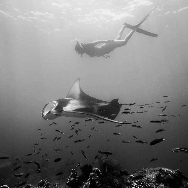 @alisonsadventures swimming with mantas in Ba'a Atoll. #SeaSplashMaldives