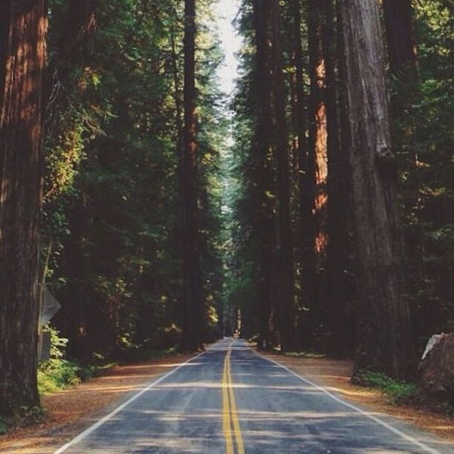 Between the rugged coast, the granite mountains, and the dense old growth forests, its hard to choose where we want to adventure this weekend in Northern California. Where are you going? #redwood #forest #oldgrowth #norcal #northerncalifornia #adventure