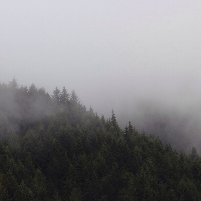 classic PNW... #keepsithydrated #pnw #fog #northcoast #oregon #woods