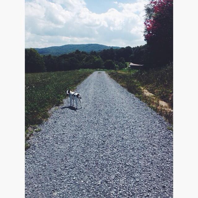 Walking to the Appalachian Trail. #salemtownboardco #adventure #handmade #skateboards