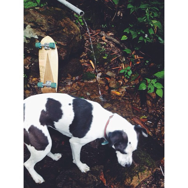 Skating down the mountain and came across this awesome fresh water coming out the side it. Is it sketchy or should I go for it? #handmade #skateboards #salemtownboardco #mountains