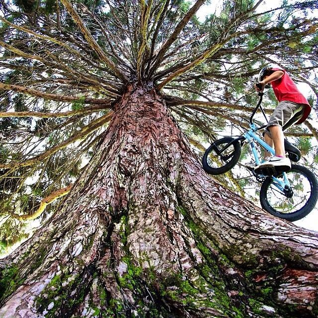 11 year old @ryanslusher_bmx gettin rad on a tree today