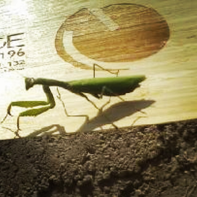 Maybe.. If one uses bio epoxy, bamboo, #solar offset creatures visit.  #madeindenver